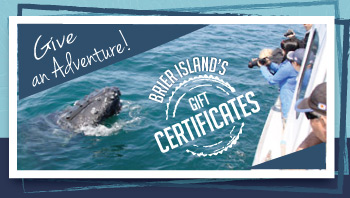 Whale Watching Gift Certificate for Brier Island