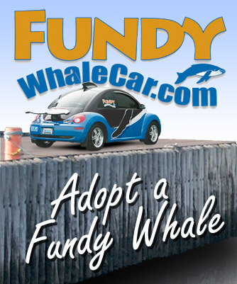 Adopt a Bay of Fundy Whale