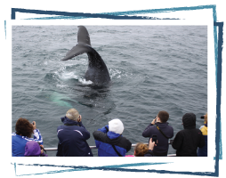 Tourists Watching Whales off Brier Island, Digby Neck
