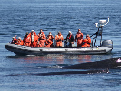 Zodiac Whale watching tour in Brier Island, Nova Scotia