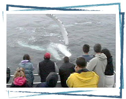 Whale Watching from theboat in Brier Island