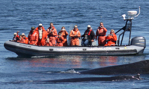 Zodiac Whale Watching Tour in Nova Scotia